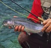 a littel fish