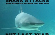 How does the shark going extinct afect my life?