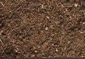 What type of soil?