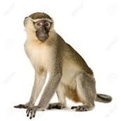 Monkey +