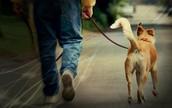 !El paseo diario de nuestros perros es indispensable!