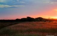 sunrise at the blackland prairie