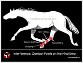 Contact Points on the Hind Limb