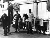 Passengers with their pets