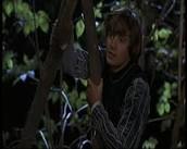 Romeo hiding in the trees
