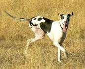 3 legged dog