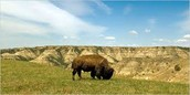 Facts of The Great Plains