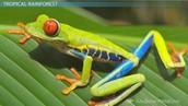 Tree Frog Adaptations & Variations