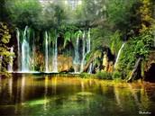 Exotic Rainforest