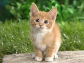 mon freres chat
