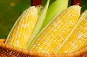 Corn that we enjoy