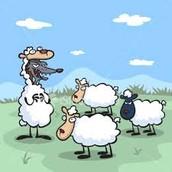 wolf eats sheep