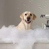 Give a Bath