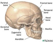 (Picture of Skull)