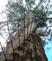 tree top climb