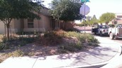 LAWN MAINTENANCE IN QUEEN CREEK