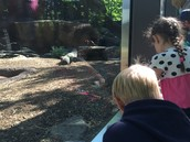 Zoo Field Trip & Animal Research