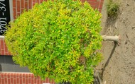 Tree& Bush