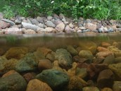 Crawfish Habitat