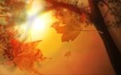 Здравствуй осень золотая!