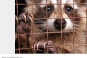 Wild animals will be forced to move