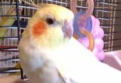 Bird #15