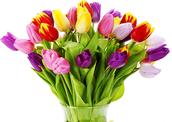 צבעוניים: לספר פרחים בעלית הגג