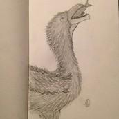 Frightening Bird