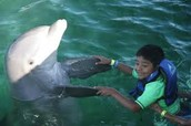 delfín y niño