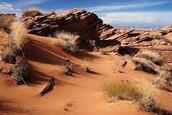 Desert discription