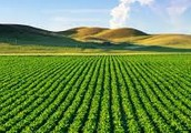 Agriculture (Ideal Economy)