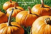 Boo-ti-ful Pumpkins