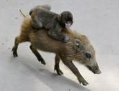 Vote for baby monkey