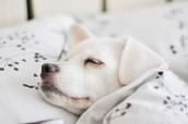 Benefits of Sleep Genius