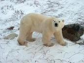 Tundra: