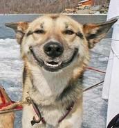 Happy Dog :)
