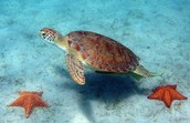 http://www.ecology.com/2013/05/21/sea-turtle-gallery/