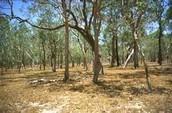 Savanna Desert in Australia