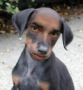 A new breed of dog is discovered!
