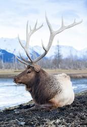 Wildlife/Fishing
