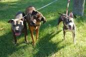 Tratamento individualizado para seu cão!