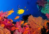Taveuni Rainbow Reef