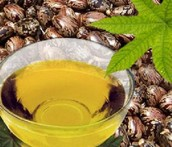 Is Castor Oil Available for Hair Regrowth Efficient?