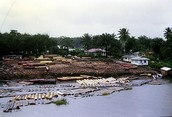 Logging Operation in Niger River.