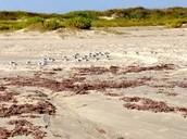 Home to Shorebirds