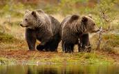 Wildlife in Nature