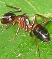 Ants sleeping