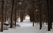 Woods and snow on path