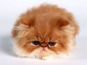 Kitties,