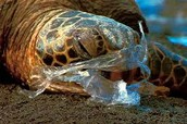 Harmful Plastic